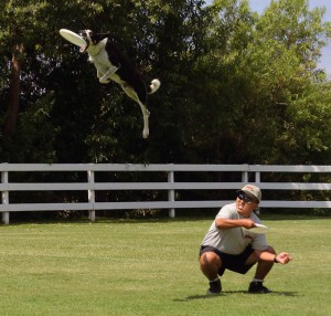 disc dogs image